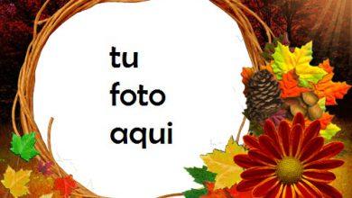 Flores de otoño Marco Para Foto 390x220 - Flores de otoño Marco Para Foto
