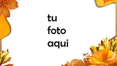 Flores de otoño en otoño Marco Para Foto 390x220 - Flores de otoño en otoño Marco Para Foto