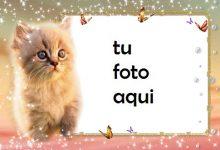 Gato gatito Marco Para Foto 220x150 - Gato gatito Marco Para Foto