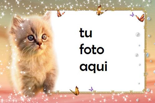 Gato gatito Marco Para Foto - Gato gatito Marco Para Foto