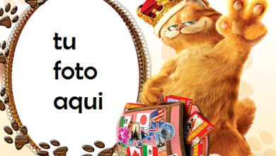 Gato travieso Marco Para Foto 390x220 - Gato travieso Marco Para Foto