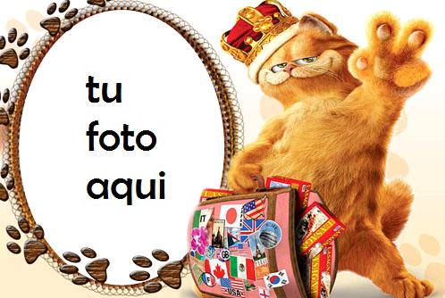 Gato travieso Marco Para Foto - Gato travieso Marco Para Foto