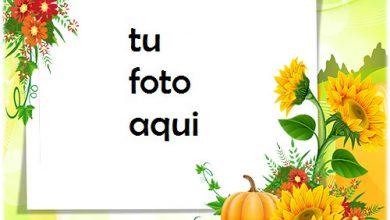Girasoles Y Calabaza Marco Para Foto 390x220 - Girasoles Y Calabaza Marco Para Foto