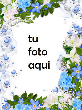 Hermosa Colección De Rosas Azules Marco Para Foto - Hermosa Colección De Rosas Azules Marco Para Foto
