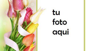 Hermoso Y Suave Ramo De Flores De Primavera Marco Para Foto 390x220 - Hermoso Y Suave Ramo De Flores De Primavera Marco Para Foto