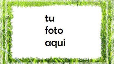 Hierba verde Marco Para Foto 390x220 - Hierba verde Marco Para Foto