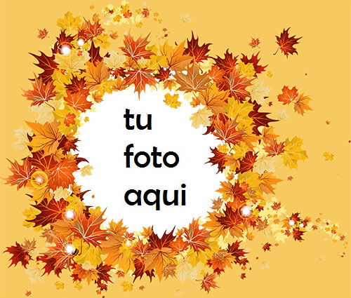 Hojas De Arce Marco Para Foto - Hojas De Arce Marco Para Foto
