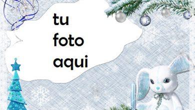 Invierno Tierno Marco Para Foto 390x220 - Invierno Tierno Marco Para Foto
