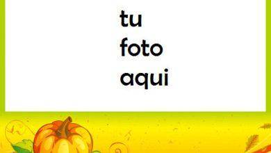 La Calabaza Como Uno De Los Símbolos De Halloween Marco Para Foto 390x220 - La Calabaza Como Uno De Los Símbolos De Halloween Marco Para Foto
