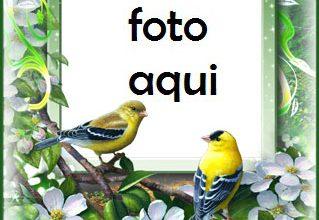 Las Aves Más Bellas Del Amor Y La Primavera. Marco Para Foto 319x220 - Las Aves Más Bellas Del Amor Y La Primavera. Marco Para Foto