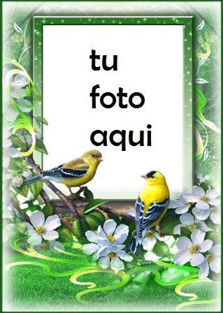 Las Aves Más Bellas Del Amor Y La Primavera. Marco Para Foto - Las Aves Más Bellas Del Amor Y La Primavera. Marco Para Foto