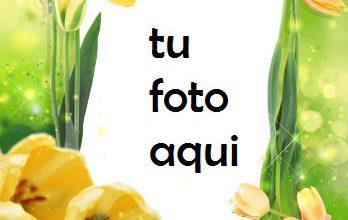 Photo of Las Flores De Tulipán Más Bellas Para Cada Amante. Marco Para Foto