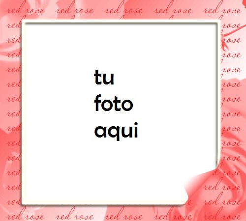 Las Flores Rojas Son Una Ternura Maravillosa Para El Día De San Valentín Marco Para Foto - Las Flores Rojas Son Una Ternura Maravillosa Para El Día De San Valentín Marco Para Foto