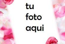 Las Rosas Y Flores Rojas Más Bellas Para El Matrimonio. Marco Para Foto 220x150 - Las Rosas Y Flores Rojas Más Bellas Para El Matrimonio. Marco Para Foto
