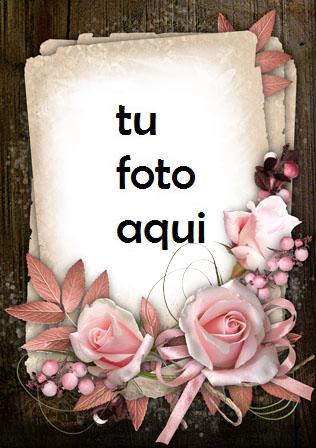 Las flores son muy finas de color rosa Marco Para Foto - Las flores son muy finas de color rosa Marco Para Foto