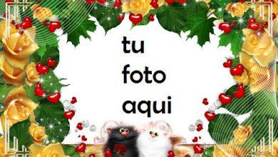 Photo of Los Gatos Aman El Romance Marco Para Foto