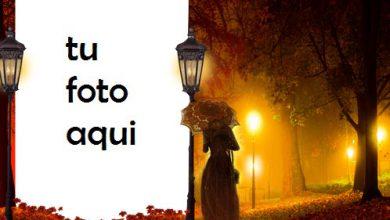 Luz Misteriosa En La Noche De Otoño Marco Para Foto 390x220 - Luz Misteriosa En La Noche De Otoño Marco Para Foto