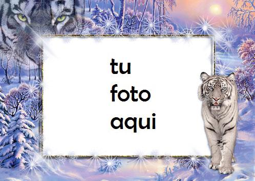 Magia Del Tigre Blanco Marco Para Foto - Magia Del Tigre Blanco Marco Para Foto