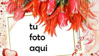 Photo of Majestad las fotos más bellas de encantador y romántico Marco Para Foto