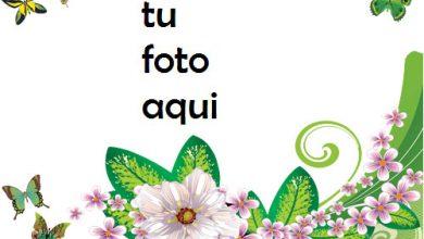 Mariposas Y Rosas Verdes Marco Para Foto 390x220 - Mariposas Y Rosas Verdes Marco Para Foto