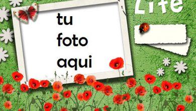 Mi Vida Esta En Tus Manos Marco Para Foto 390x220 - Mi Vida Esta En Tus Manos Marco Para Foto