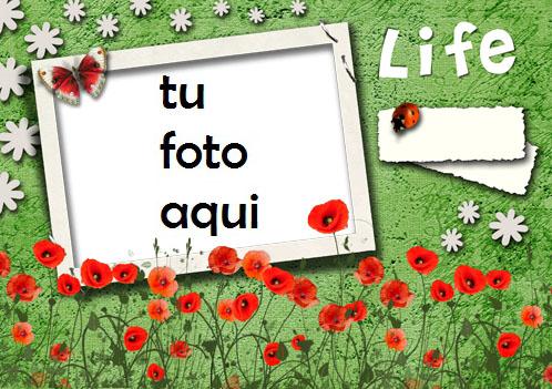 Mi Vida Esta En Tus Manos Marco Para Foto - Mi Vida Esta En Tus Manos Marco Para Foto