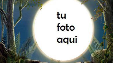 Noche En Bosque Marco Para Foto 390x220 - Noche En Bosque Marco Para Foto