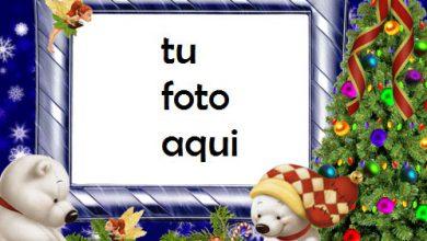 Osos De Peluche Blancos Marco Para Foto 390x220 - Osos De Peluche Blancos Marco Para Foto