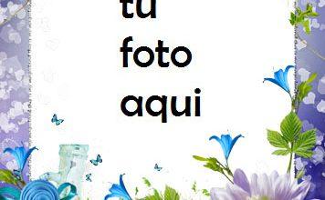 Photo of Paraíso De Rosas Azules Y Violetas Marco Para Foto