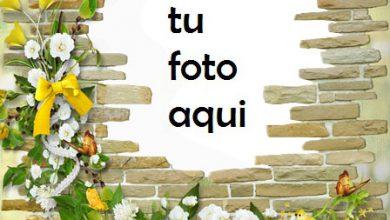 Pared De Rosas Románticas Marco Para Foto 390x220 - Pared De Rosas Románticas Marco Para Foto