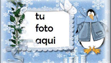 Patos De Invierno Y Nieve Marcos Para Foto 390x220 - Patos De Invierno Y Nieve Marcos Para Foto