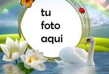 Pelican Amor Romántico Marco Para Foto 220x150 - Pelican Amor Romántico Marco Para Foto