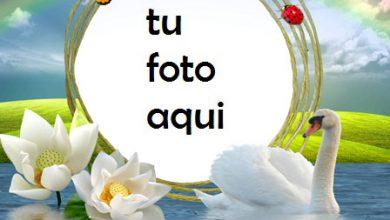 Pelican Amor Romántico Marco Para Foto 390x220 - Pelican Amor Romántico Marco Para Foto