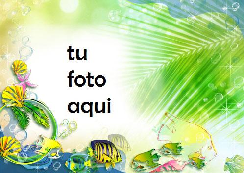 Pescado Rayado Amarillo Marco Para Foto - Pescado Rayado Amarillo Marco Para Foto
