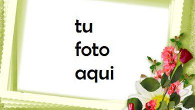 Photo of Románticas Rosas Rojas Y Blancas Marco Para Foto