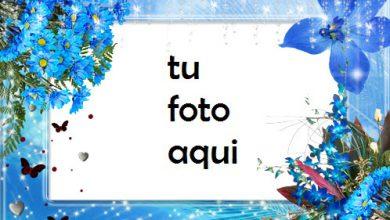 Tiernas Flores Azules Marco Para Foto 390x220 - Tiernas Flores Azules Marco Para Foto