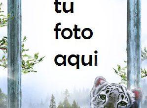 Tigre Blanco Marco Para Foto 298x220 - Tigre Blanco Marco Para Foto