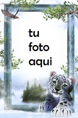 Tigre Blanco Marco Para Foto - Tigre Blanco Marco Para Foto