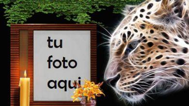 Tigre De La Noche Marco Para Foto 390x220 - Tigre De La Noche Marco Para Foto