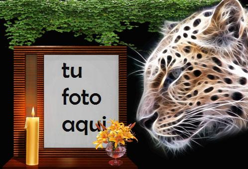 Tigre De La Noche Marco Para Foto - Tigre De La Noche Marco Para Foto