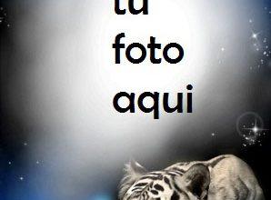 Tigre En La Noche Marco Para Foto 298x220 - Tigre En La Noche Marco Para Foto