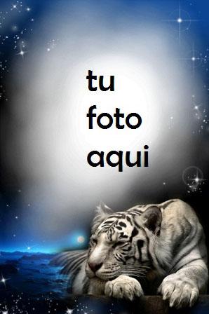 Tigre En La Noche Marco Para Foto - Tigre En La Noche Marco Para Foto