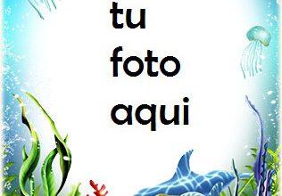Tortuga Bajo El Agua Marco Para Foto 316x220 - Tortuga Bajo El Agua Marco Para Foto