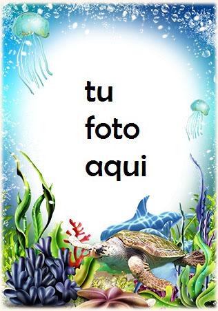Tortuga Bajo El Agua Marco Para Foto - Tortuga Bajo El Agua Marco Para Foto