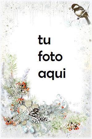 Un Pájaro De Amor Romántico Marco Para Foto - Un Pájaro De Amor Romántico Marco Para Foto