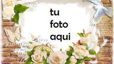 boda marcos Rosas blancas marco para foto 390x220 - boda marcos Rosas blancas marco para foto