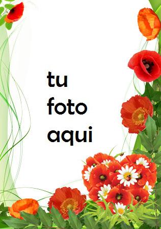 Marco Para Foto Amapolas Color De Amor Amor Marcos - Marco Para Foto Amapolas Color De Amor Amor Marcos
