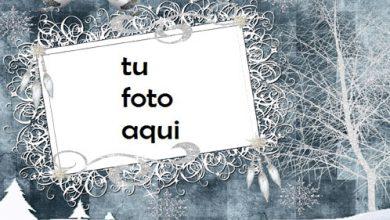 Photo of Marco Para Foto Belleza Del Bosque De Invierno Invierno Marcos