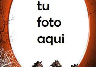 Marco Para Foto Caballos Variedad Marcos 316x220 - Marco Para Foto Caballos Variedad Marcos