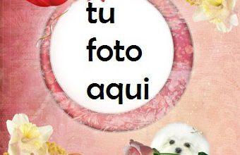 Marco Para Foto Cachorro Con Rosa Amor Marcos 340x220 - Marco Para Foto Cachorro Con Rosa Amor Marcos